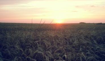 Coucher de soleil sur champs de blé